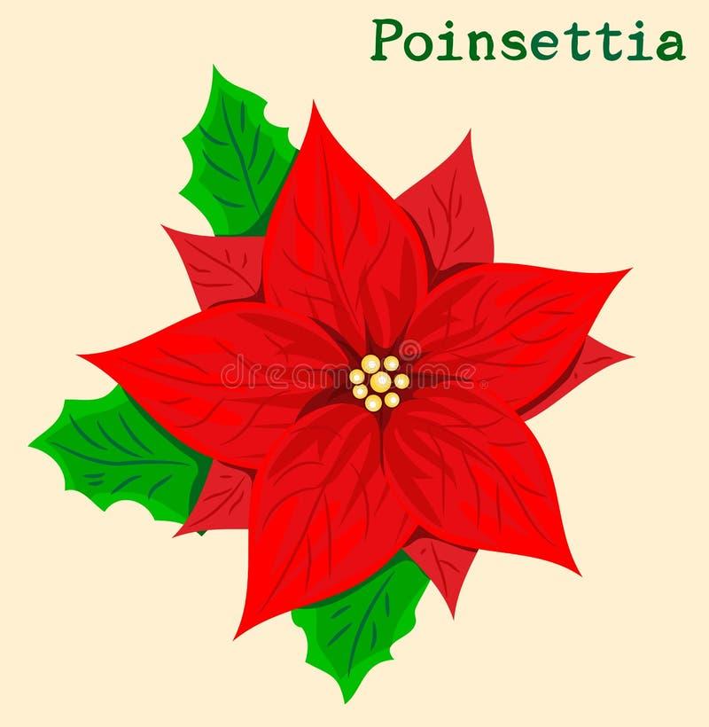 Flor del Poinsettia ilustración del vector