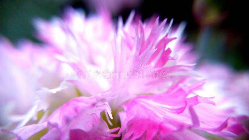 Flor del prado imagenes de archivo