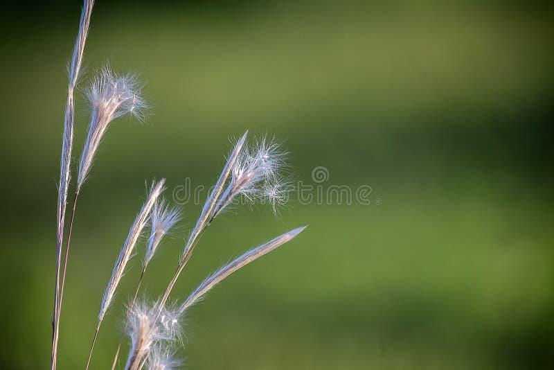 Flor del primer en prado colorido foto de archivo libre de regalías