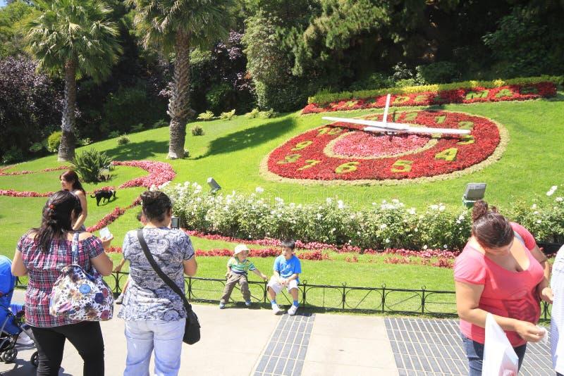 Flor del reloj, Valparaiso, Vina Del Mar, o Chile fotos de stock royalty free