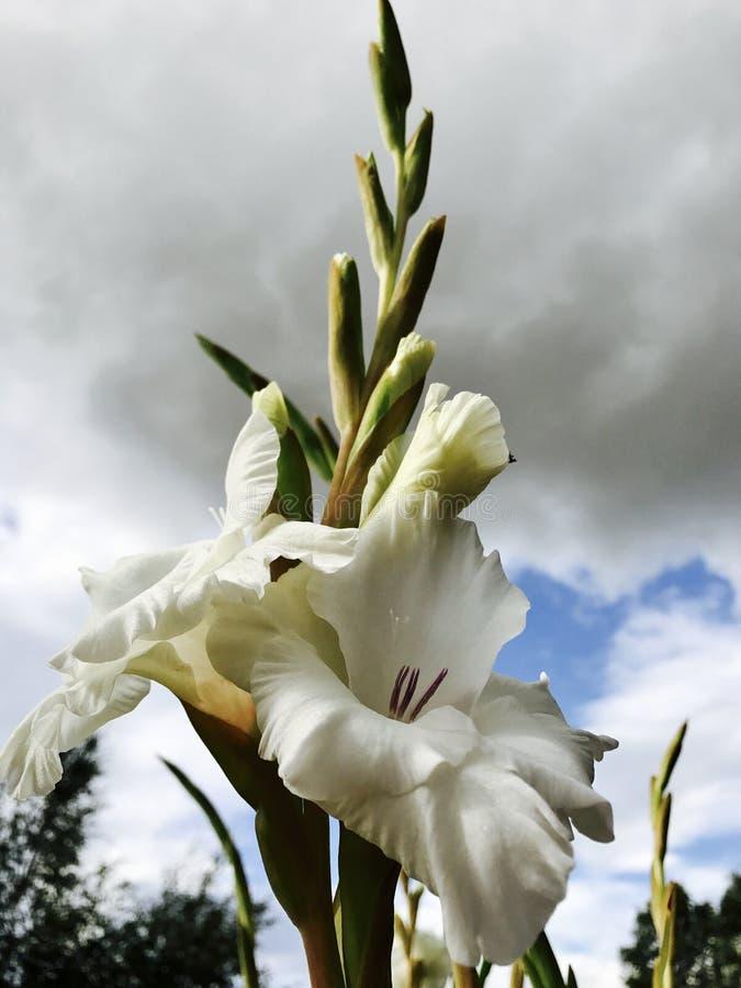 Flor del resorte fotos de archivo
