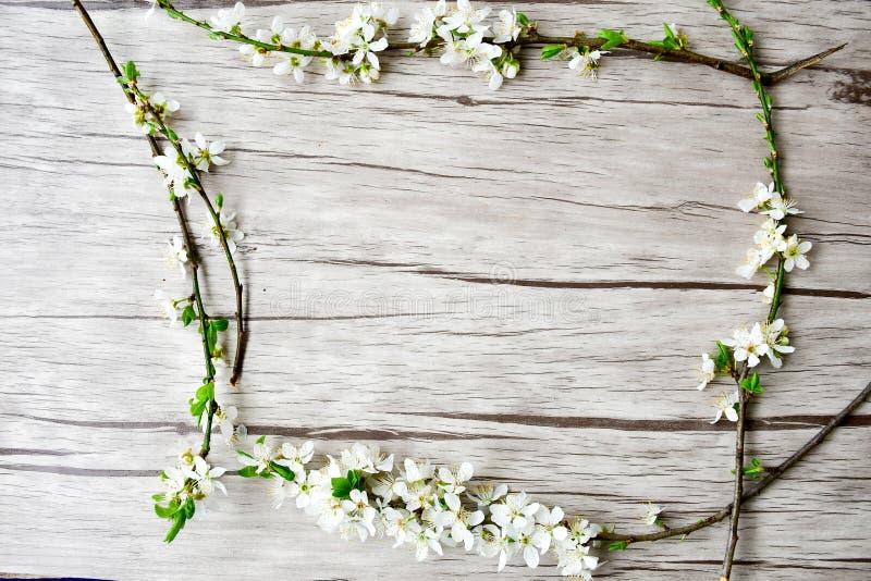 Flor del resorte imagenes de archivo