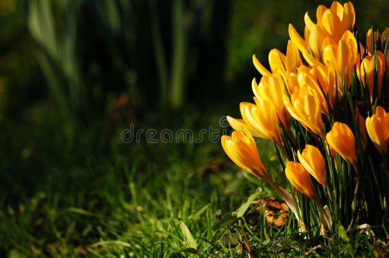 Flor del resorte foto de archivo