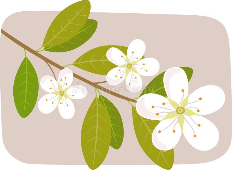 Flor del resorte stock de ilustración