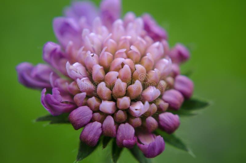 Flor del resorte imagen de archivo libre de regalías