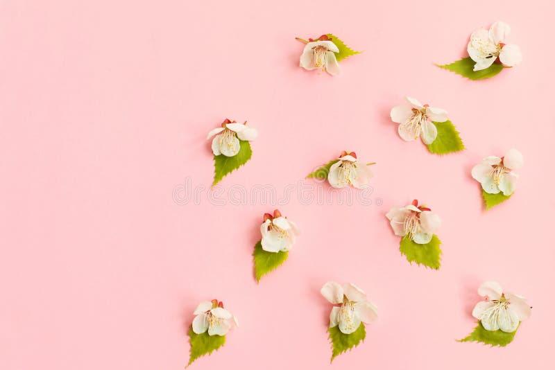 Flor del resorte floración de la manzana de la primavera, tarjeta floral rosada del fondo de las flores, en colores pastel y suav fotografía de archivo libre de regalías