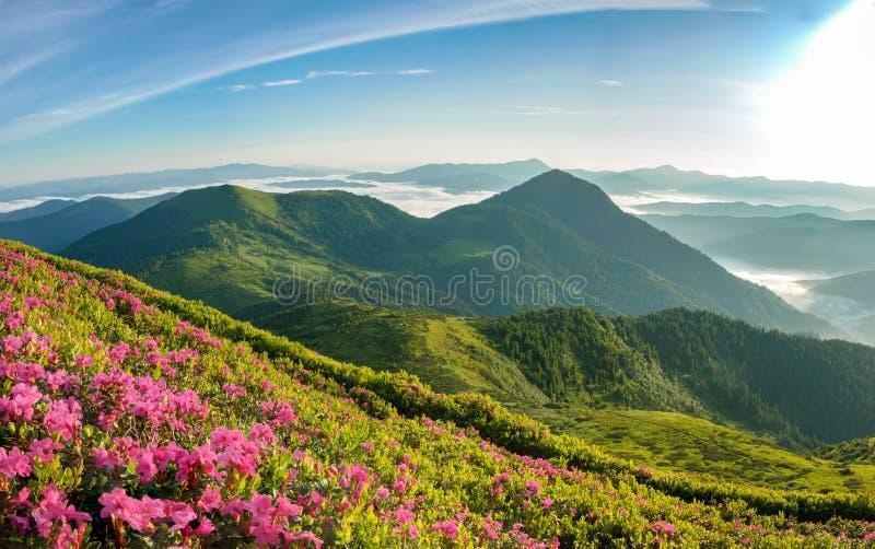 Flor del rododendro fotos de archivo
