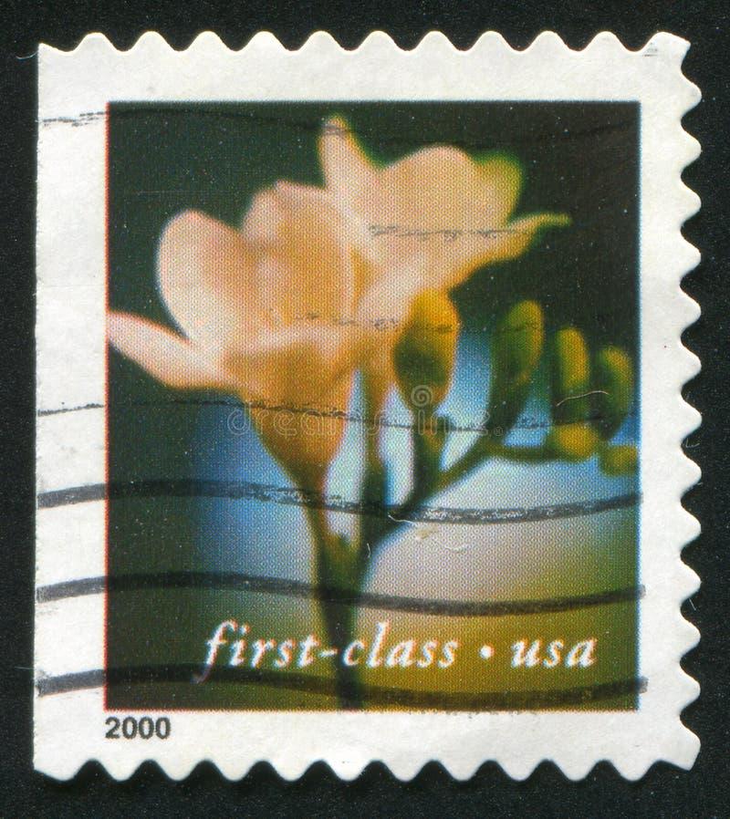 Flor del sello stock de ilustración