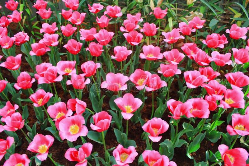 Flor del silbido de bala fotos de archivo