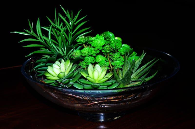 Flor del succulent del Crassulaceae fotos de archivo libres de regalías