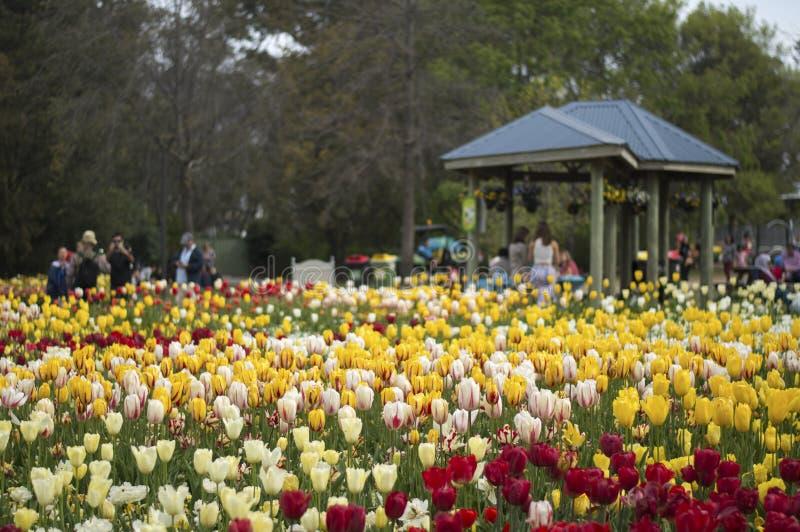 Flor del tulipán en Floriade 2016 foto de archivo libre de regalías