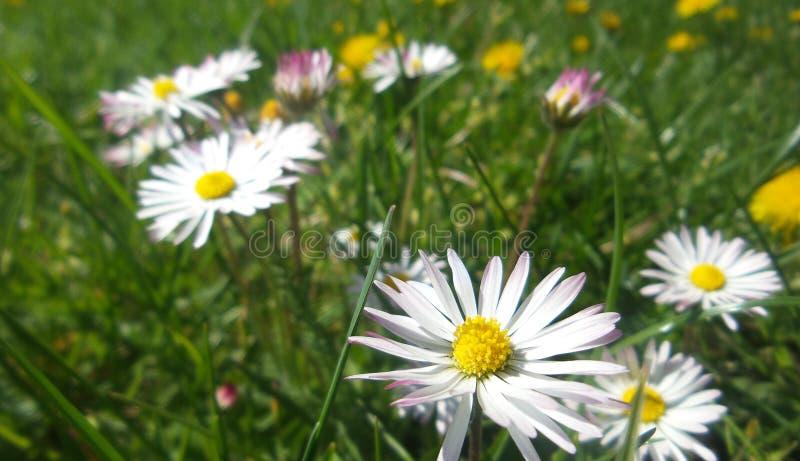 Flor del verano foto de archivo