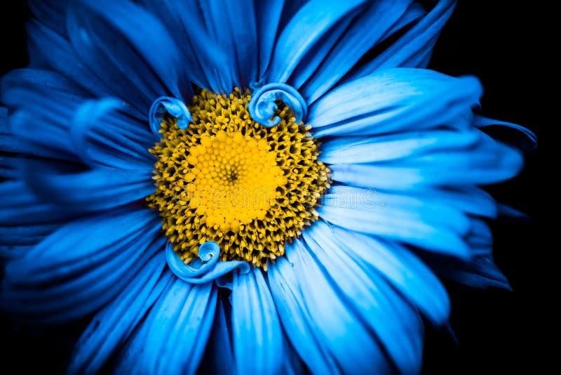 Flor del verano con el centro amarillo foto de archivo