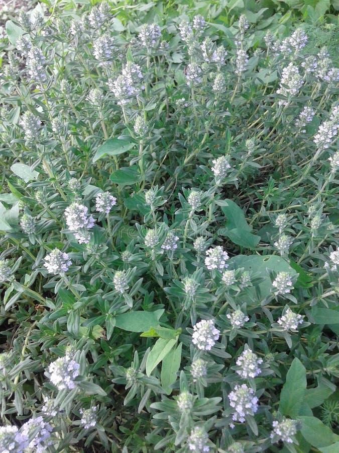 Flor del verde de hierba imagen de archivo