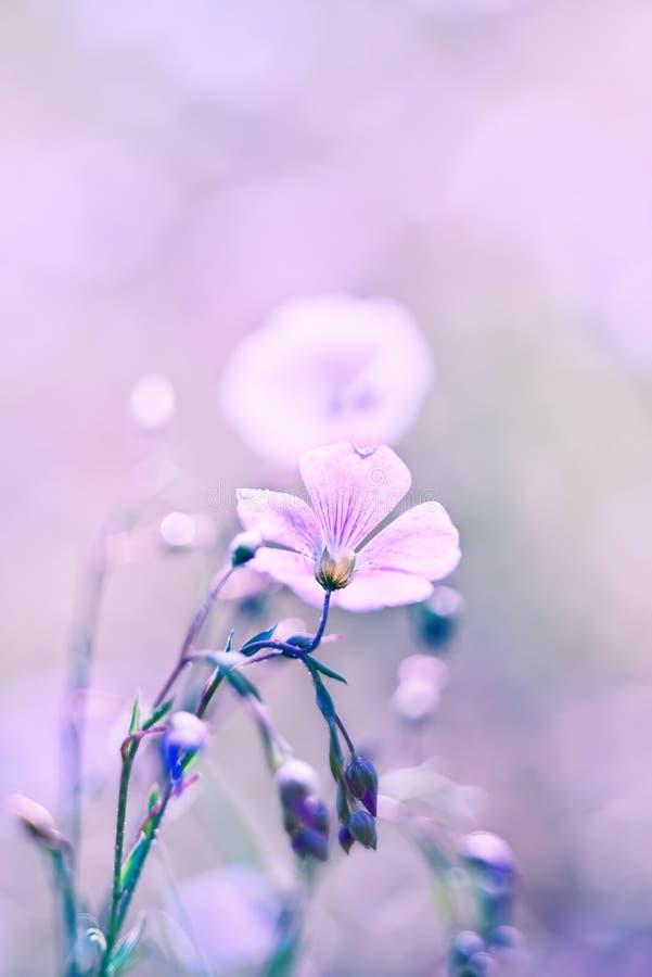 Flor delicada del lino foto de archivo