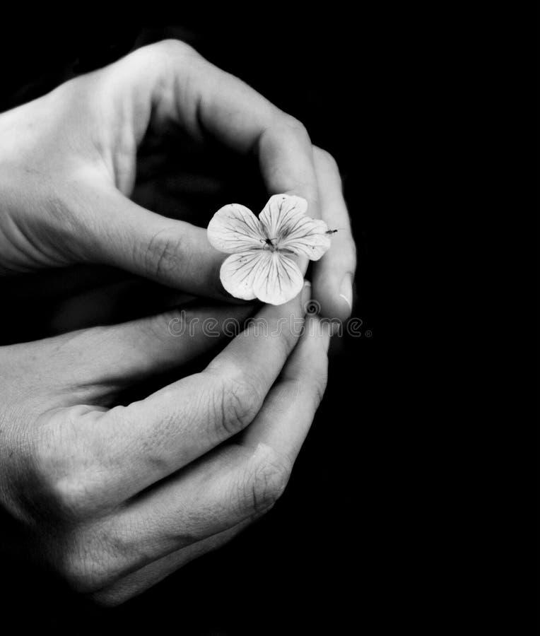 Flor delicadamente segurada imagens de stock