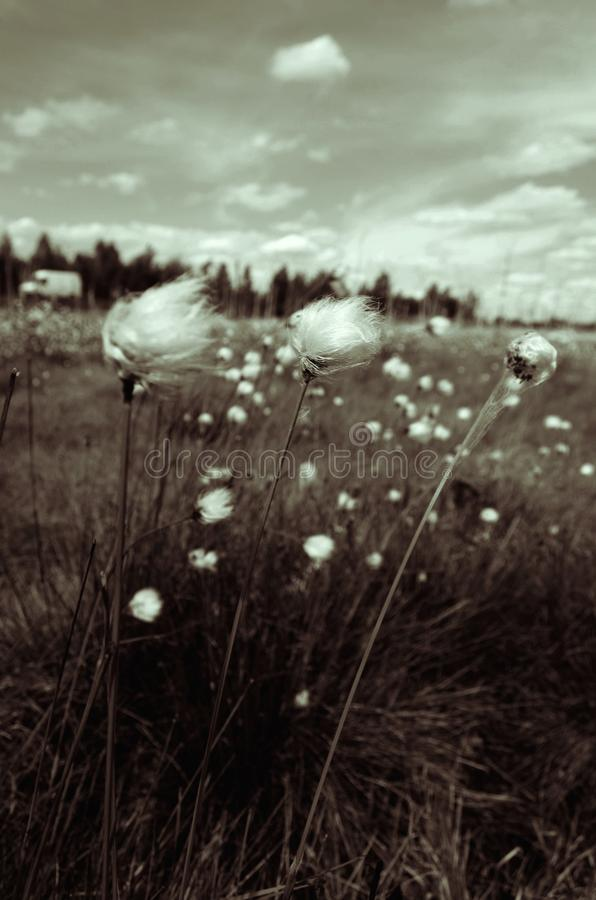 Flor depressiva imagem de stock royalty free