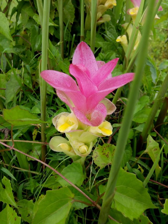 Flor desconhecida fotografia de stock royalty free