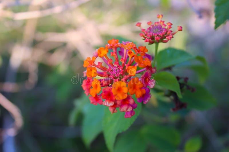 Flor desconhecida foto de stock