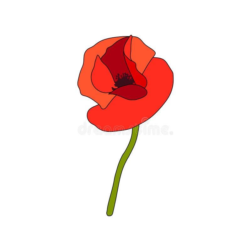 Flor desenvolvida e haste da papoila vermelha Vista lateral anzac Estilo liso do esbo?o Embandeiramento do botão ilustração royalty free