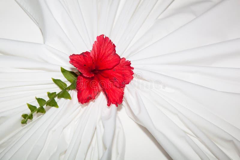 Flor desvanecida fotografia de stock