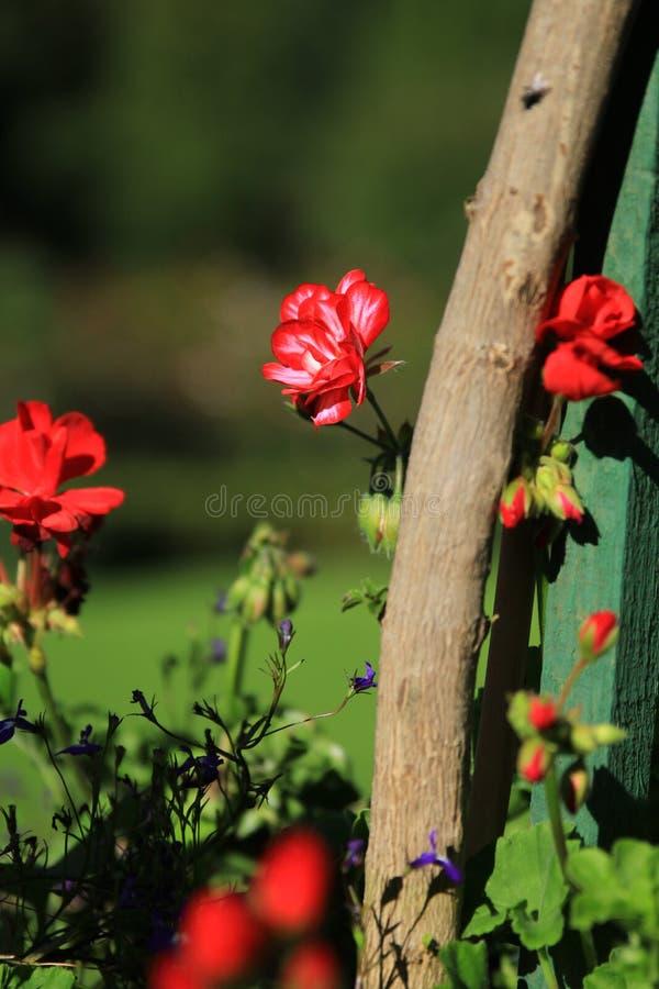flor detrás de la rama fotografía de archivo