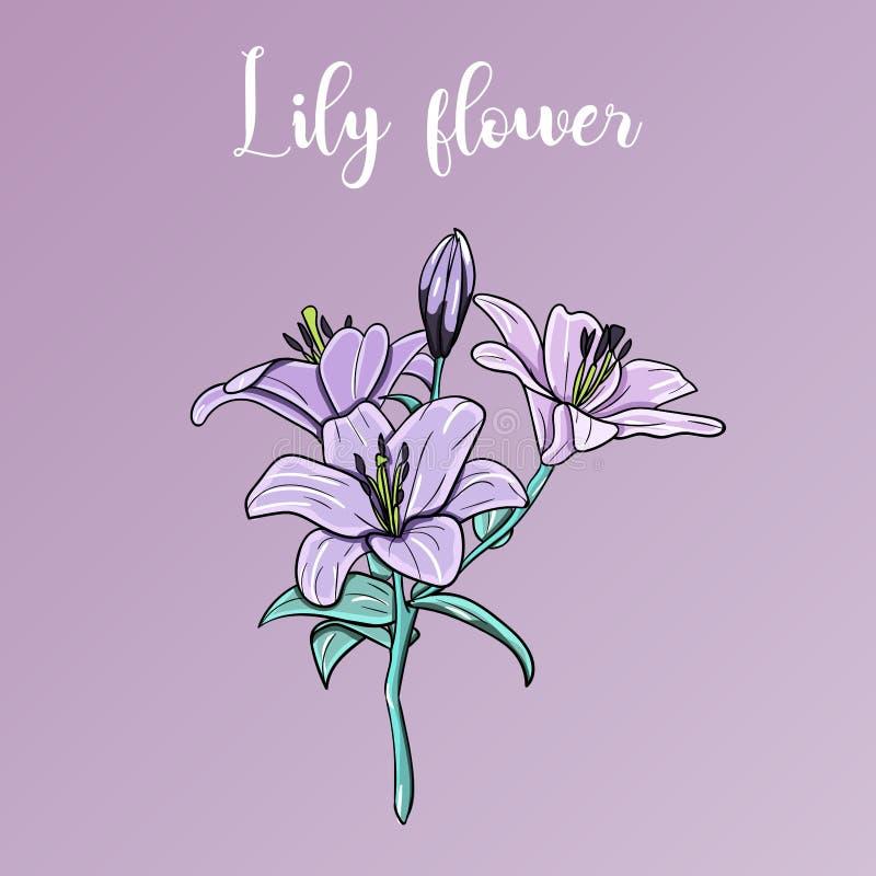 Flor dibujada mano del lirio ilustración del vector
