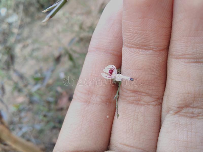 Flor diminuta imagens de stock
