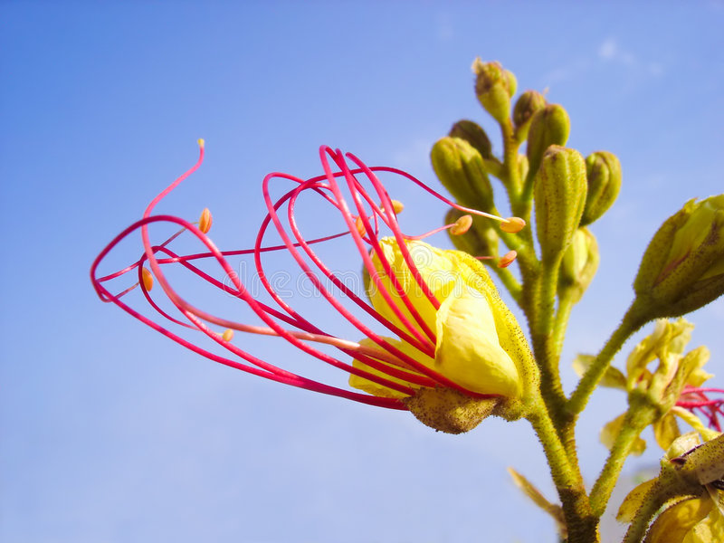 Flor dinámica fotos de archivo libres de regalías