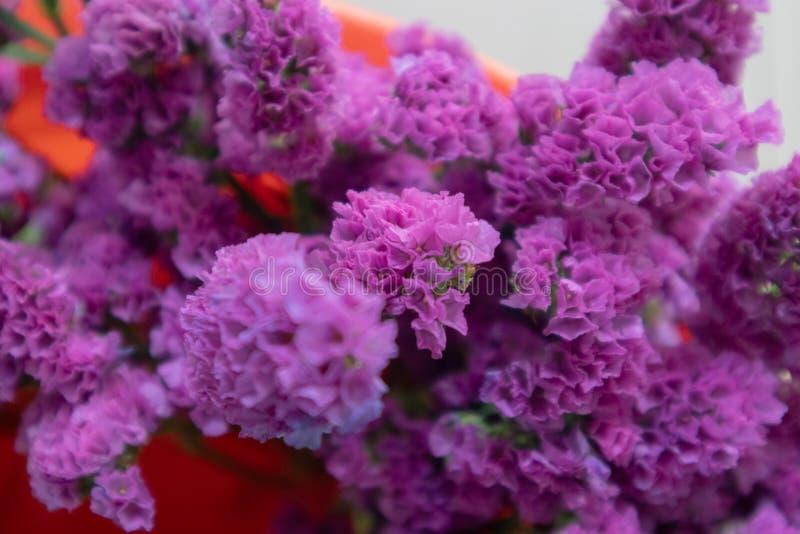 Flor do alfazema-corte do mar fotografia de stock