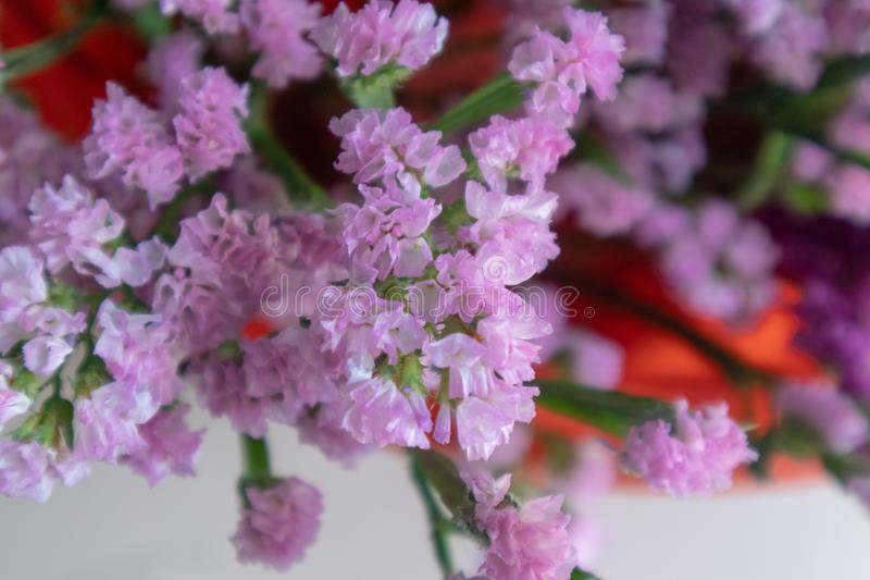Flor do alfazema-corte do mar imagem de stock royalty free