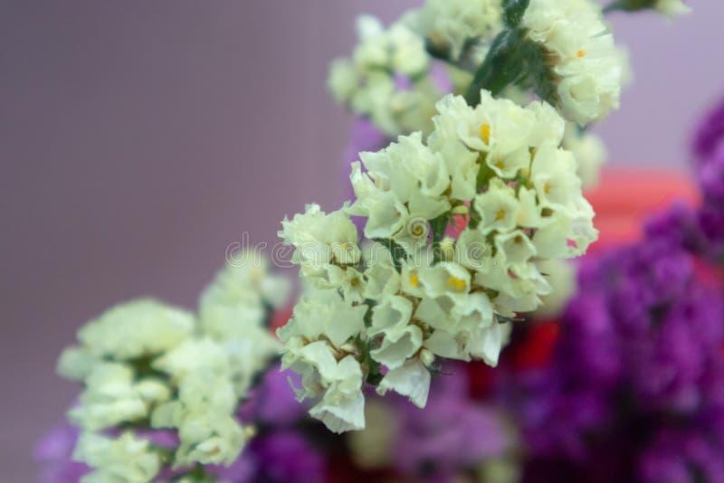 Flor do alfazema-corte do mar fotografia de stock royalty free