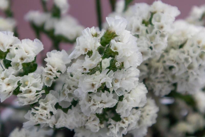 Flor do alfazema-corte do mar imagens de stock royalty free