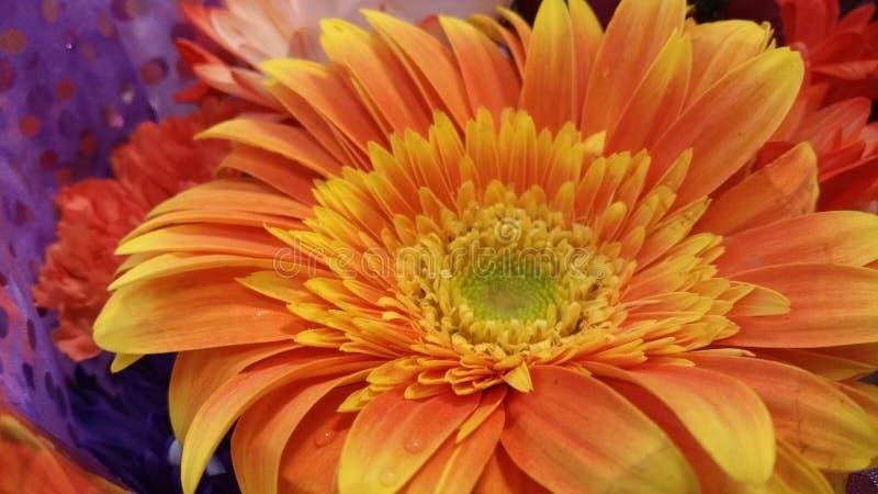 Flor do amarelo alaranjado fotografia de stock