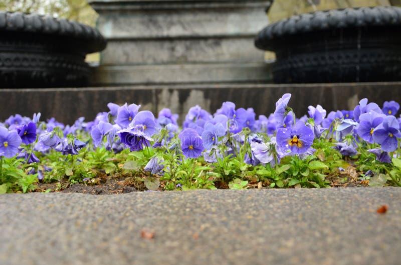 Flor do amor perfeito decorativa fotografia de stock royalty free