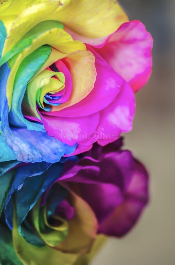 Flor do arco-íris com reflexão foto de stock royalty free