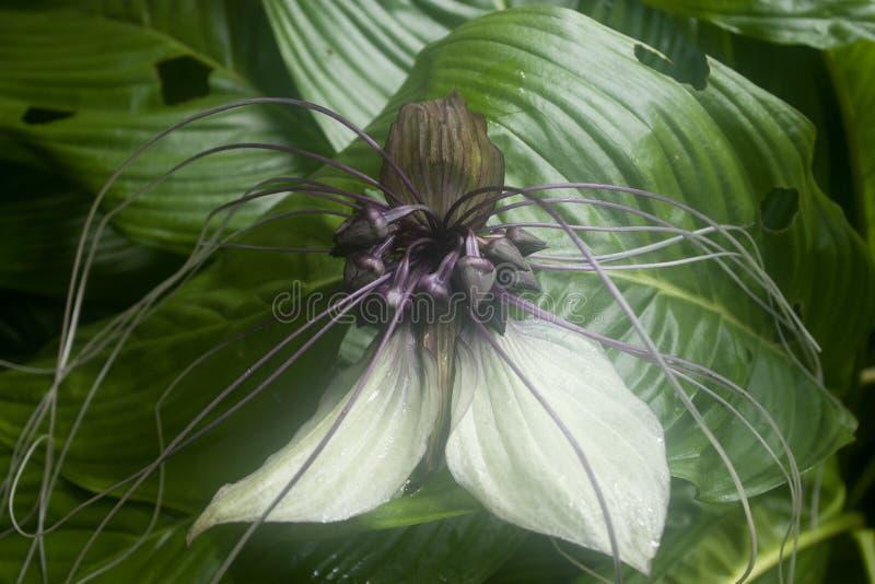Flor do bastão em branco e em roxo imagens de stock royalty free