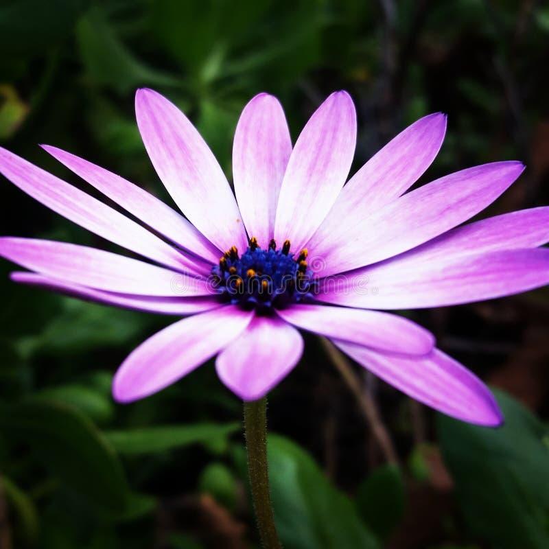 Flor do bom dia foto de stock