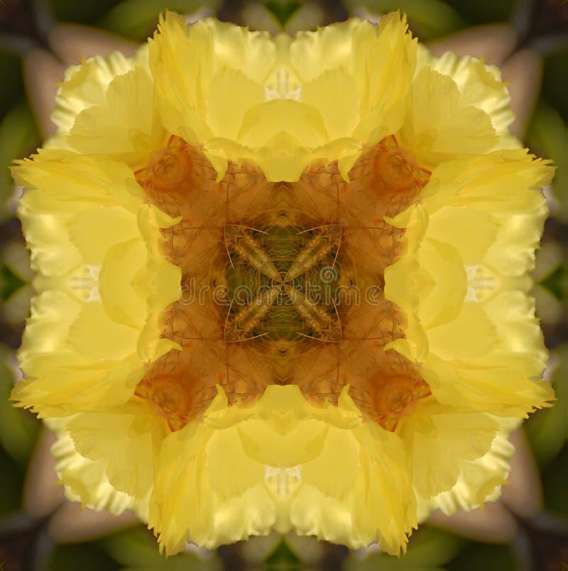 Flor do cacto do caleidoscópio ilustração royalty free