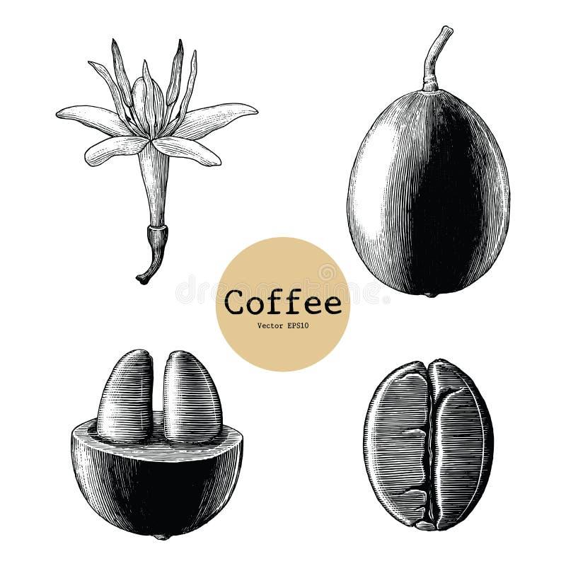 Flor do café, clipart do vintage do desenho da mão do feijão de café isolada ilustração stock