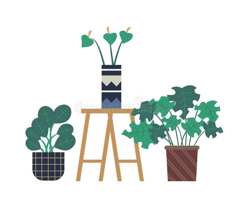 Flor do Calla no potenciômetro, vasos de flores da estufa ilustração stock