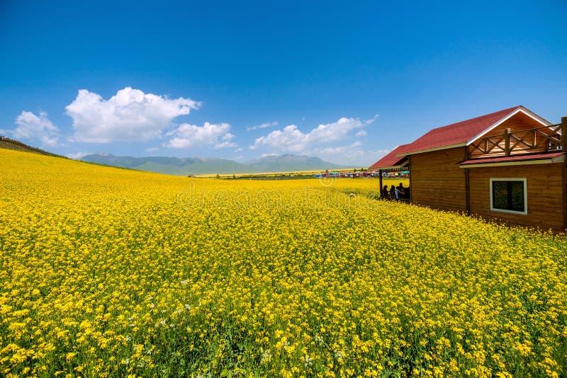 Flor do canola da fonte da porta fotografia de stock royalty free