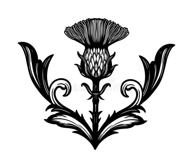 Flor do cardo - o s?mbolo de Esc?cia ilustração stock