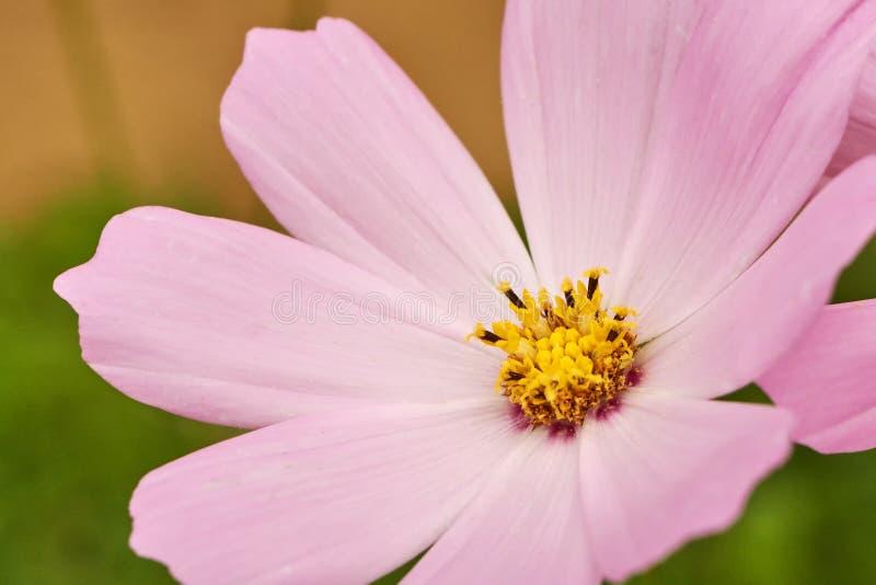 Flor do close-up no jardim foto de stock