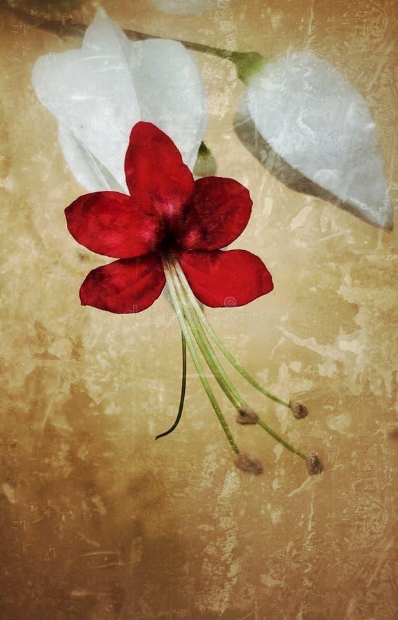 Flor do coração de sangramento que estoura adiante imagens de stock