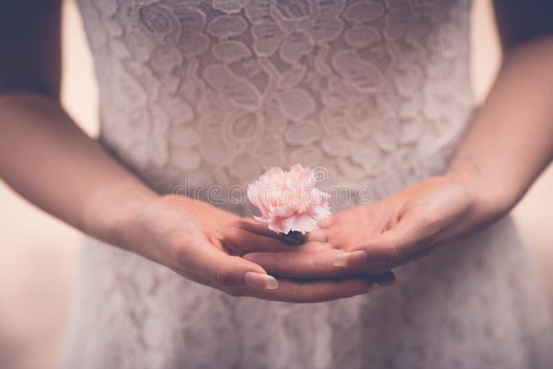 Flor do cravo fotos de stock royalty free