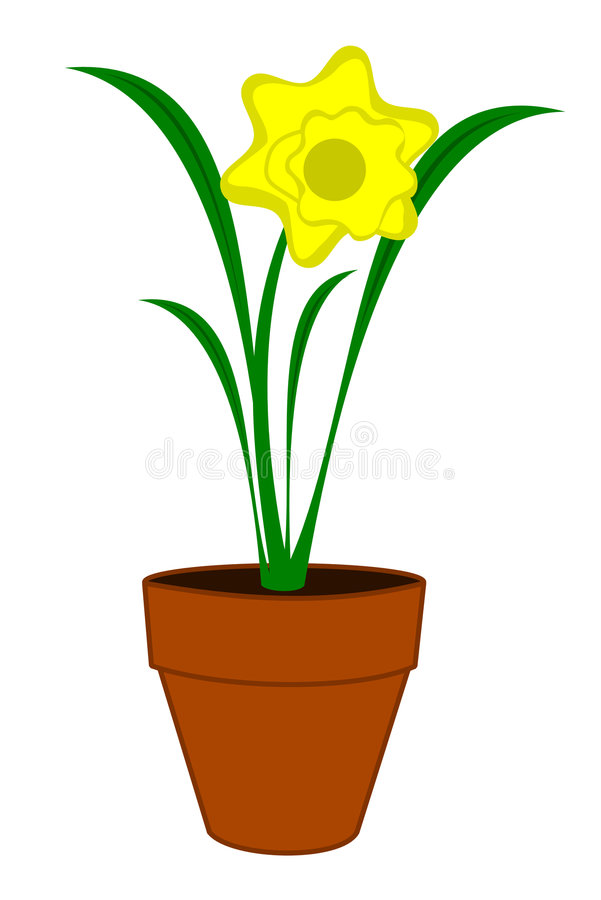 Flor do Daffodil ilustração royalty free