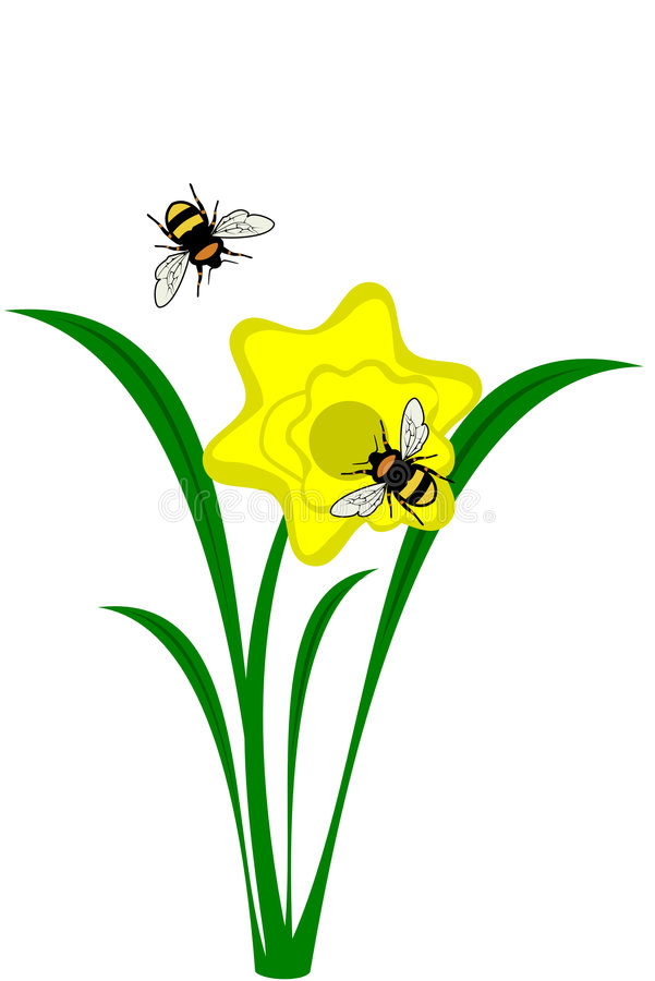 Flor do Daffodil ilustração do vetor