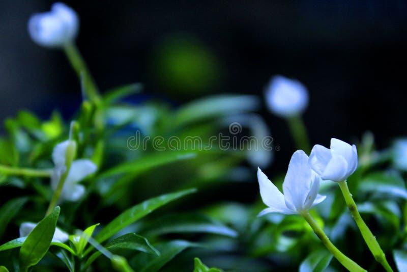 Flor do espírito 1 foto de stock royalty free