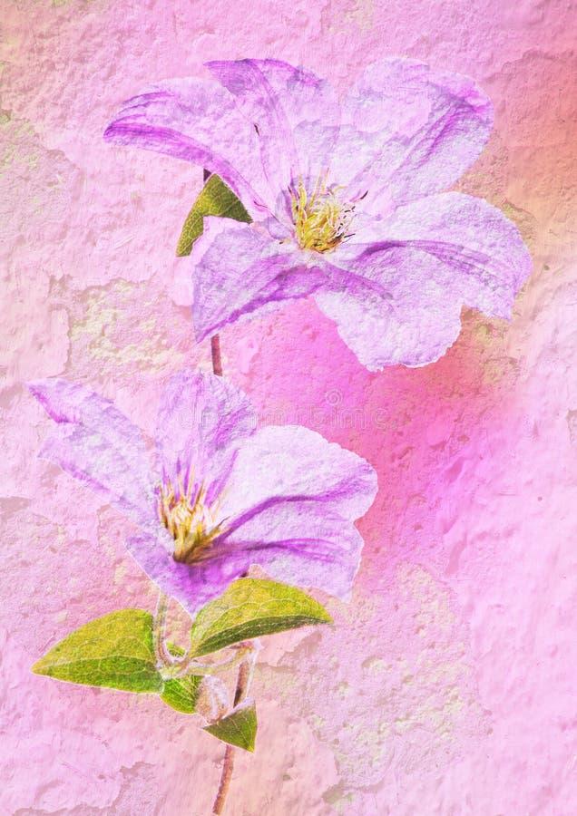 Flor do estilo do vintage - clematis imagem de stock royalty free